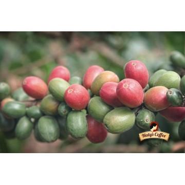 Pražená káva – Naty´s Coffee, 200g