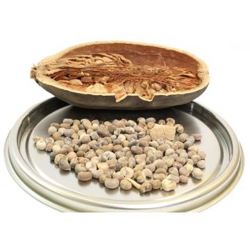 Semena baobabu - 5 semen